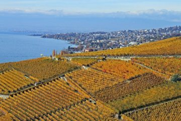 Lausanne viewed from Lavaux Vineyards in Autumn