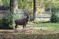 Servion Zoo near Lausanne, Switzerland