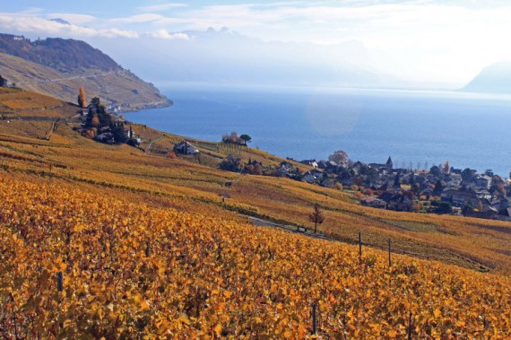 Vineyards above Cully in the Lavaux
