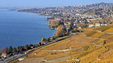 Lavaux Vineyards near Lausanne