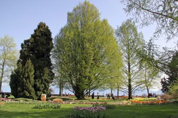 The Parc de l'Indépendance in Morges is a lovely shady park with more than 50 different species of trees.