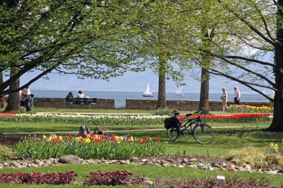 Morges Tulip Festival in Switzerland