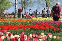 Morges Tulip Festival on Lake Geneva, Switzerland