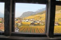 Autumn Vineyards Viewed from Château d'Aigle Castle, Switzerland