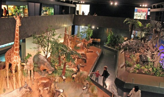 African animals on display in the Natural History Museum in Geneva, Switzerland