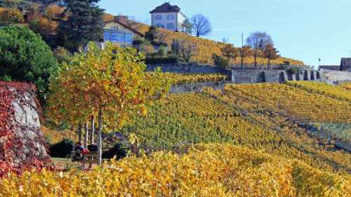 Hiking in the Vineyards of Lavaux