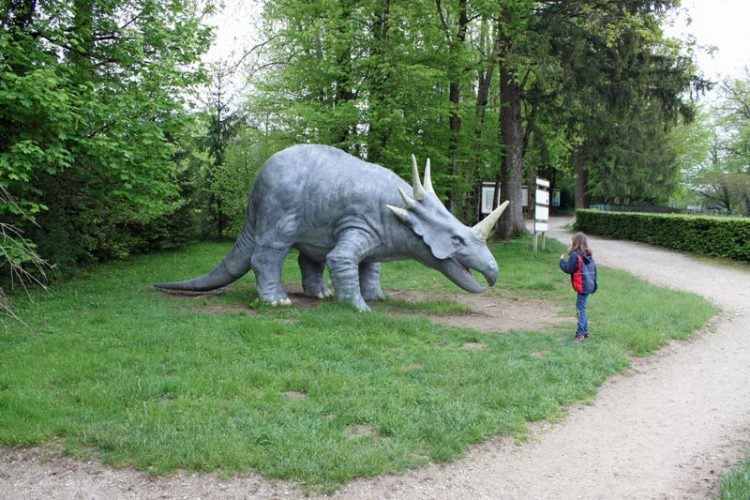 Triceratop in the Dino Zoo and Prehistoric Park