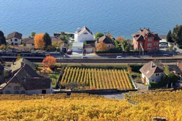 Lavaux vineyards on the shores of Lake Geneva in autumn