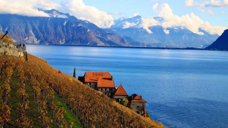 Lavaux and Lake Geneva