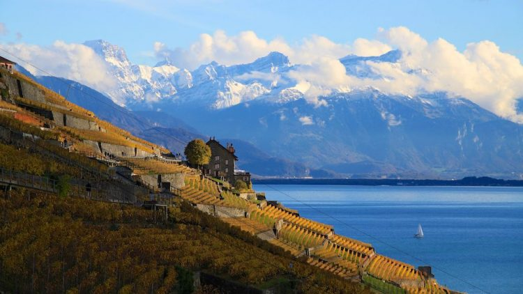 Alps viewed from the Lavaux in Autumn