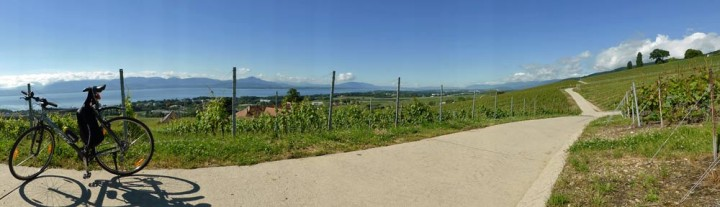 Cycling in the vineyards near Lake Geneva