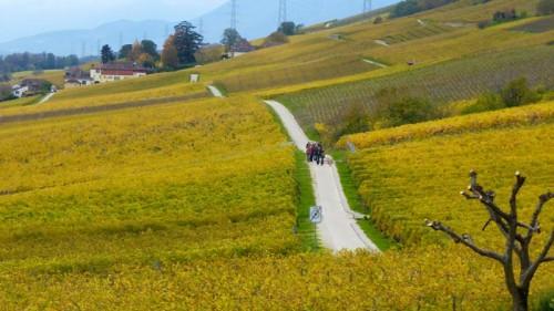 Autumn vineyards in Vaud