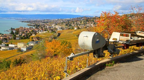 Lausanne viewed from Lavaux in autumn