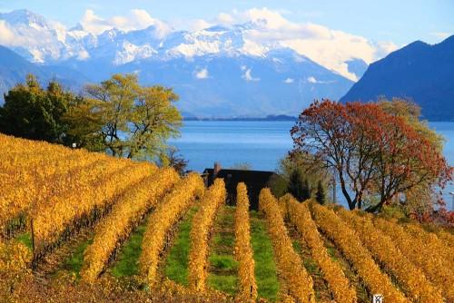 Lavaux in Autumn