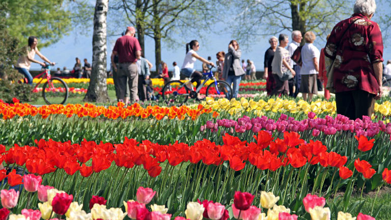 Morges Tulip Festival on Lake Geneva