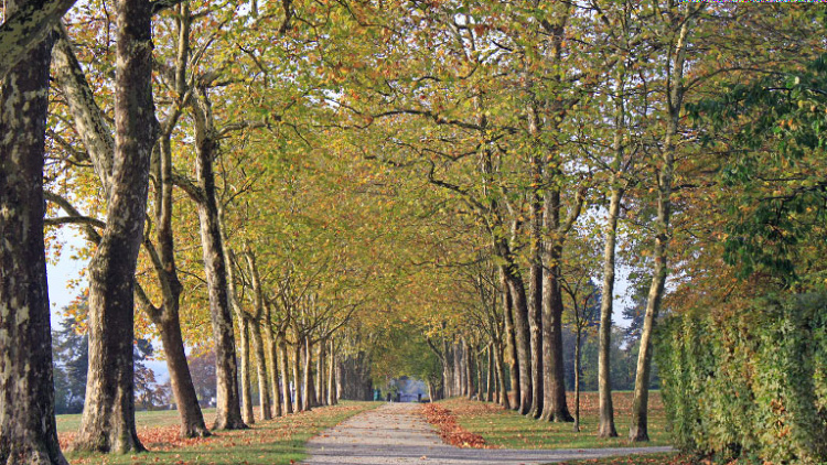 Tree-Lined Avenue Leading from Chateau de Coppet, Switzerland