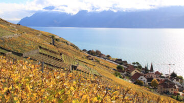 Photos of Grandvaux Vineyards in Autumn, Lavaux