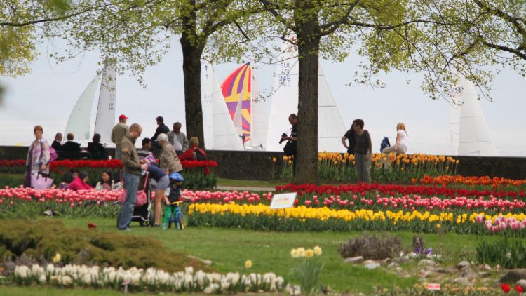 The free Morges Tulip Festival is a top festival for colorful photos of the finest spring event on Lake Geneva in Switzerland.