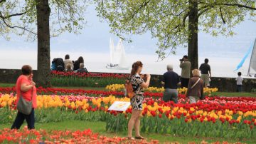 The annual Fête de la Tulipe in Morges is one of the most beautiful spring events on Lake Geneva in Switzerland. Around 150,000 tulips, daffodils, and hyacinths can be enjoyed blooming in the Parc de l'Indépendence à Morges behind the chateau on the Lac Léman lakefront.